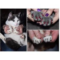 Protectores Para Uñas De Gatos Y Perros Envio Gratis