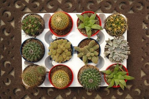 Cactus mini en mercado libre for Donde venden cactus