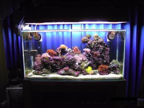 Peceras con acabado aleman marinas o agua dulce 10 000 for Peces de agua dulce para peceras sin oxigeno