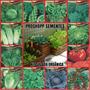 3000 Sementes Do Kit Salada 12 Especies Envelopes Lacrados