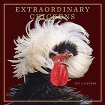 Livro Importado Extraordinary Chickens 2011 Wall Calendar