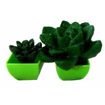 Mini Cactus Plantas Flores Magicas Bio Gel Crece Con Agua