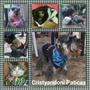 Pañoletas Con Broche Plastico Para Perros Y Gatos, Pequeño