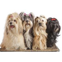 10 Pares De Moños Para Mascotas Perritas Envío Gratis Dhl