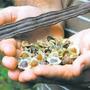 Árvore Moringa Oleifera 200 Sementes Para Mudas