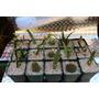 Plantas Souvenir Cactus Suculentas Regalos