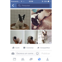 Fêmea Bulldog Frances Pedigree Canil Luna Del Pietro