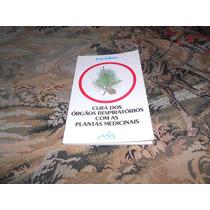 Cura Dos Orgãos Respiratorios Com As Plantas Medicinais