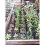 Cactus Y Suculentas Por Cajon De 40 Unidades