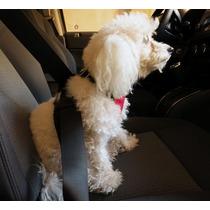 Pechera Arnés Cinturón De Seguridad Auto Para Perro O Gato