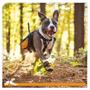 Botines Para Perros Kurgo Step-n-strobe Dog Shoes, Medium