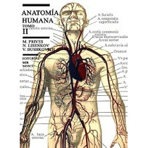 Anatomia Humana Ii Esplacnologia Organos De Secrecion Intern