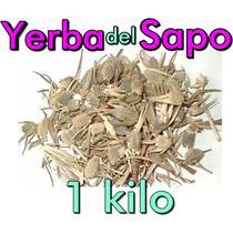 Yerba Del Sapo 1 Kg Hierba Deshidratada Eryngium Carlinae Te