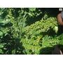 Fertilizante Líquido Para Solo Com 40% De Nitrogênio Com 1 L