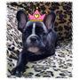 Filhota De Bulldog Frances Tigrada