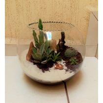 -terrario- Arreglo Botánico (natural)