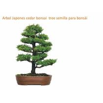 Arbol Japones Cedar Bonsai Tree Semilla Para Bonsái