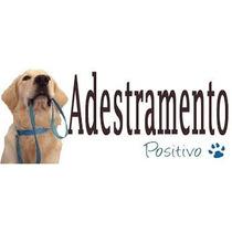 E-book Vídeo Adestramento De Cães Adulto Filhote Fre.grátis