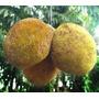 Marang / Marangue Uma Das Frutas Mais Gostosas Do Mundo