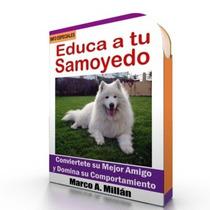 Como Educar A Un Samoyedo - Guía De Adiestramiento Raza