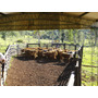 Campo Ganadero Forestal Yerbatero Agricola En Misiones