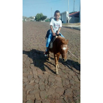 Vendo Poney Domesticado Macho Bagual Super Manso.