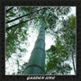 Semente Bambu Mosso Gigante Para Mudas + Brinde