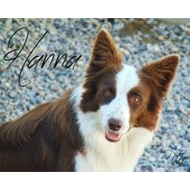 Filhotes De Border Collie - Machos Pedigree Cbkc
