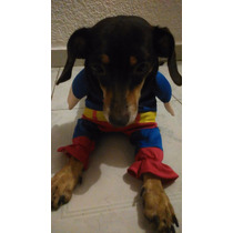 Traje De Superman Para Mascotas, Talla Ch Y M, Envìo Gratis!