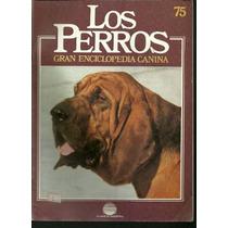 Enciclopedia Canina Perro Osos Cerelia Alano Azul Gascuña 75