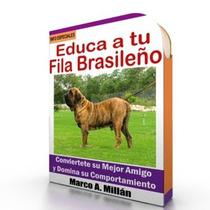 Como Educar A Un Fila Brasileño - Guía De Adiestramiento