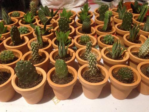 Cactus con suculentas miniatura con maceta de barro caja for Macetas de barro pequenas