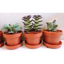 Maceta De Plástico 3cm Con Planta Suculenta O Cactus