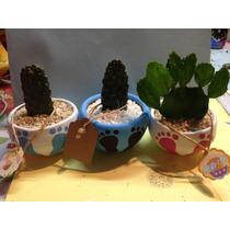 Cactus Y Suculentas Decoradas Para Recuerdos