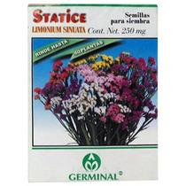 Semilla P/siembra Statice Limonium