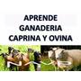 Kit Aprende Ganaderia Caprina Y Ovina Envio Gratis