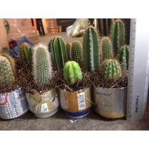 Cactus Especies Variadas Por Caja 30
