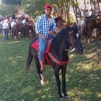 Cavalo Mangalarga 7/8 Manso Capao