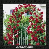 100 Sementes Rosas Trepadeiras Cores Mista + Brinde