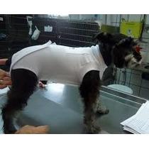 Moldes De Roupas Cirúrgica Para Cachorros