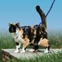 Come With Me Kitty - Arnés Para Gato Con Correa Extensible