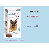 Bravecto Anti Pulgas Y Garrapatas Coatza Grande
