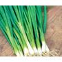 50 Sementes De Cebolinha Verde Graúda - Frete Grátis