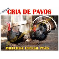 Aprende Ebook Avicultura Especial Cria De Pavo, Envio Gratis