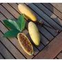 25sement Maracuja Banana-passiflora Mollissima-frete Gratis@