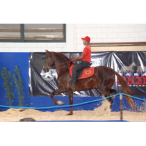 Cavalo Mangalarga.. Muitos Titulos Campeao Bras 2014 - Bahi