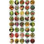 Kit Sementes Pimentas 20 Variedades + Bhut Jolokia + Brindes