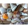 Conchas Mar Filipinas Importada Natural Cesta Vime Mix