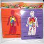Rompecabeza Educativo Sistema Circulatorio Foami Cuerpo Huma