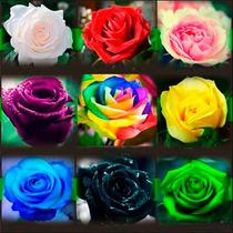 45 Sementes De Rosa Cores Variadas E Raras Arco-íris, Negra!